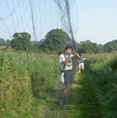Extracting at Icklesham © BTO